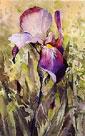 Single iris by Trevor Waugh
