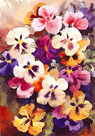 Pansies by Trevor Waugh