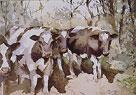 Sunlit Cows by Trevor Waugh