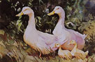 Mothers and Ducklings by Trevor Waugh