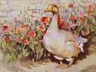 Proud Duck by Trevor Waugh