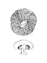Foraged Funghi