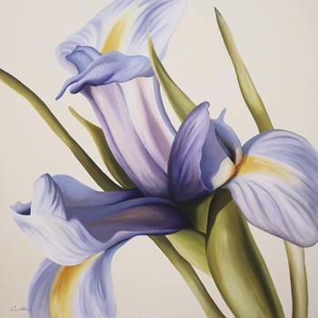 Iris Wind