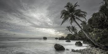Tropical Retreat