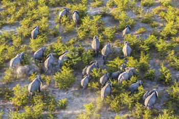 On the Move - Elephants