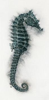 Seahorse I