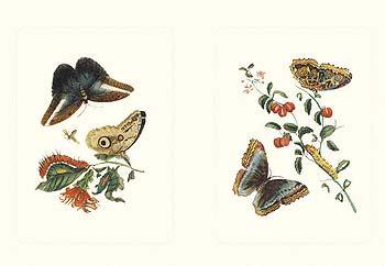 Entomology I