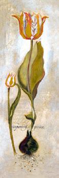 Tulipa Violoncello V