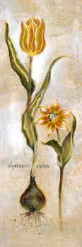 Tulipa Violoncello VI