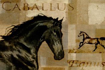 Caballus I