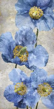Poppy Splendour I