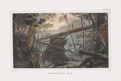 Grande Floresta Brasil - Expedition by The Vintage Collection