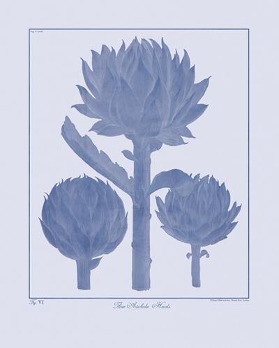 Ink Botanicus - Artichokes by Maria Mendez