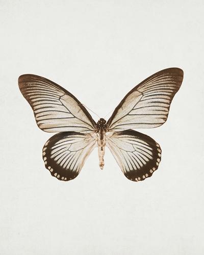 Butterfly Press by Irene Suchocki