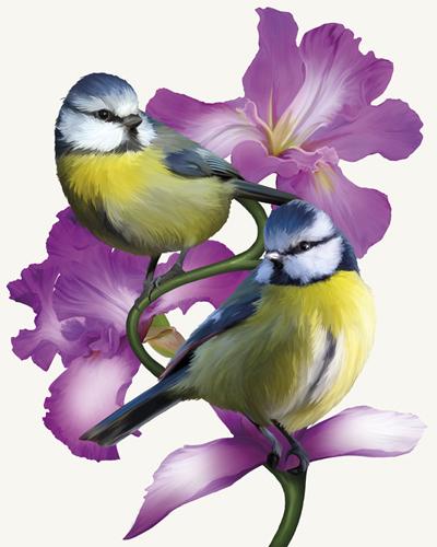 Pure Birdsong - Harmony by Sam Kemp