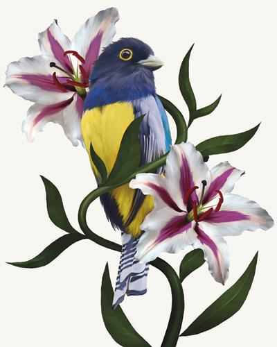 Pure Birdsong - Chorus by Sam Kemp