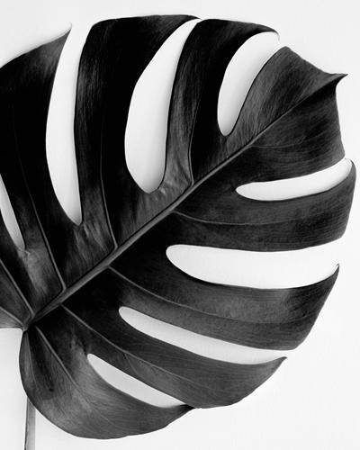 Monstera Solo - Noir by Irene Suchocki