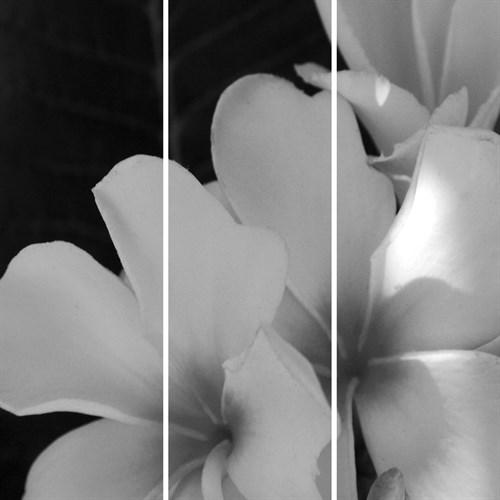 Tropic Bloom - Trio by Tony Koukos
