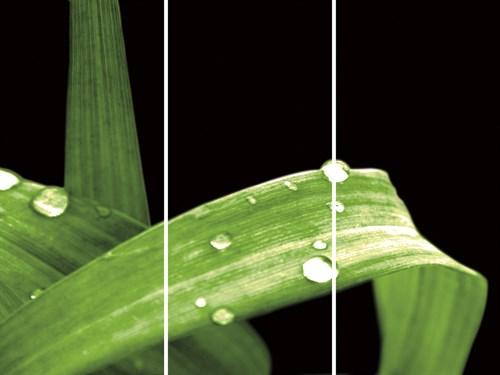 Grassy Dew - Trio by Douglas Yan