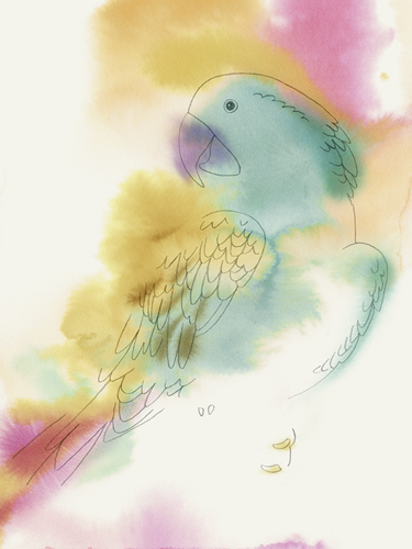 Paradise Parrot - Perch by Kristine Hegre