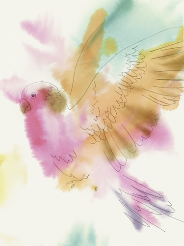 Paradise Parrot - Fly by Kristine Hegre