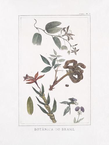 Botanica do Brasil - Floresta by Maria Mendez