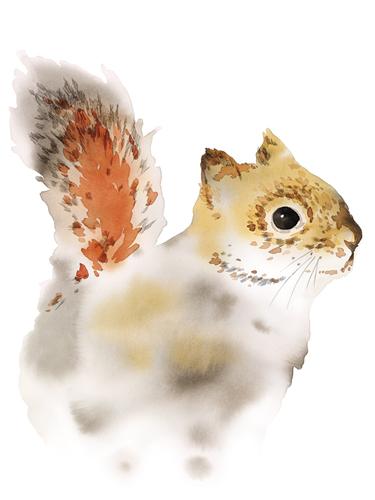 Secret Squirrel by Kristine Hegre