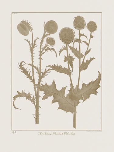 Botanicus Fawn - Nodding Thistle by Maria Mendez