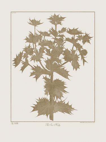 Botanicus Fawn - Sea Holly by Maria Mendez