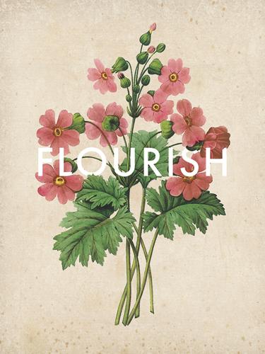 Flourishing Florals by Rufus Coltrane