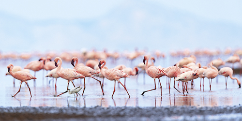 Flamboyance of Flamingos by Wink Gaines