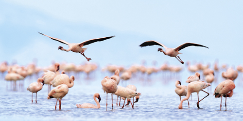 Flying Flamingos by Wink Gaines