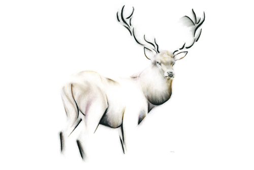 Fine Stag by Kellas Campbell