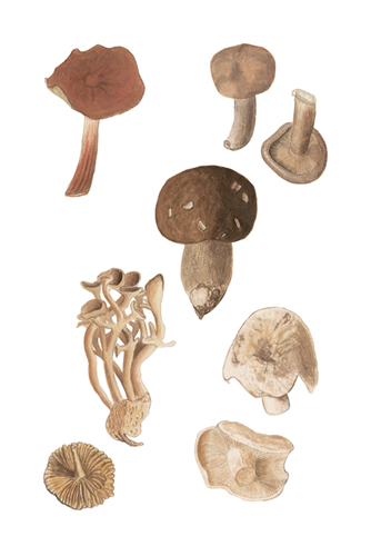 Foraged Fungi - The Vintage Collection