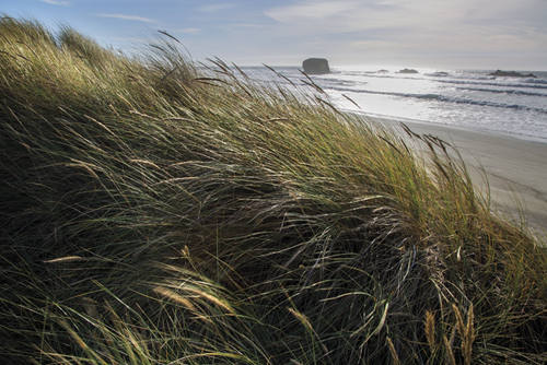 Seagrass by Andrew Geiger