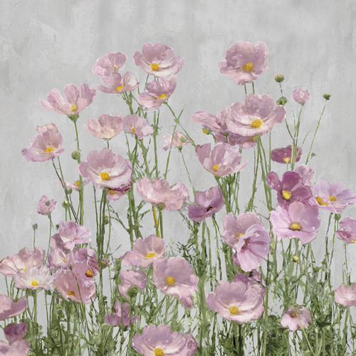 Blushing on Grey by Tania Bello