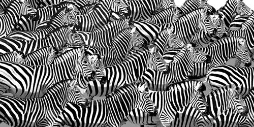 Zebra Collage by Mark Chandon