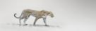 White Leopard by Bobbie Goodrich