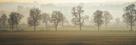 Misty Morning by Ella Lancaster