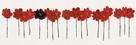 Poppy Drift II by Alice Buckingham