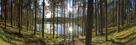 Forest Reflections by Henrik Lund