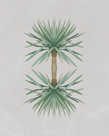 Yucca Gloriosa - Reflection by The Drammis Collection