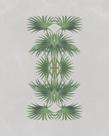Livistona Australis - Reflection by The Drammis Collection
