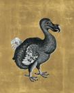 Dodo - Aurum by The Drammis Collection