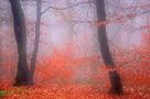 Seasons of Mist by Mikael Svensson