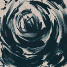 Wild Rose III by Tanuki