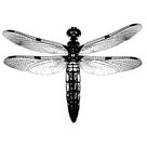 Dragonfly I by Clara Wells