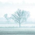 Misty Meadow I by Ella Lancaster