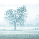 Misty Meadow II by Ella Lancaster