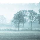 Misty Meadow III by Ella Lancaster